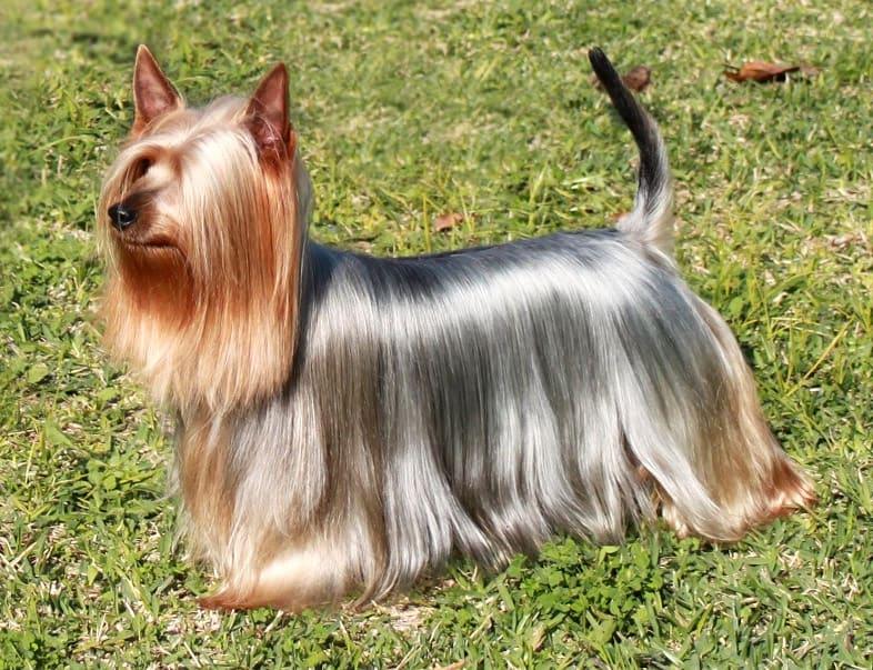 shiny dog's hair