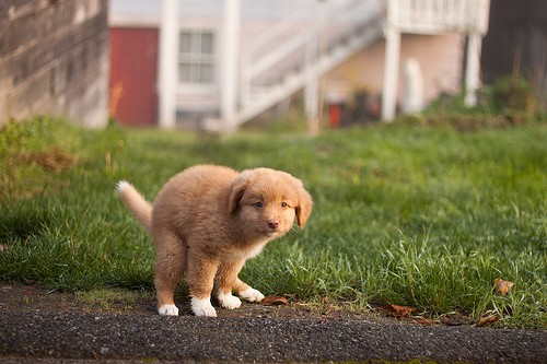 puppy pooping