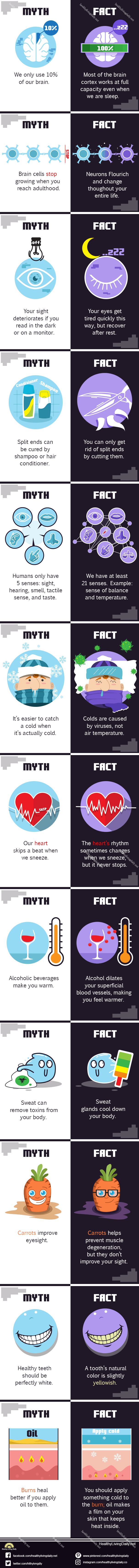 infographic image of myth and fact