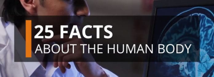 25 Facts About The Human Body